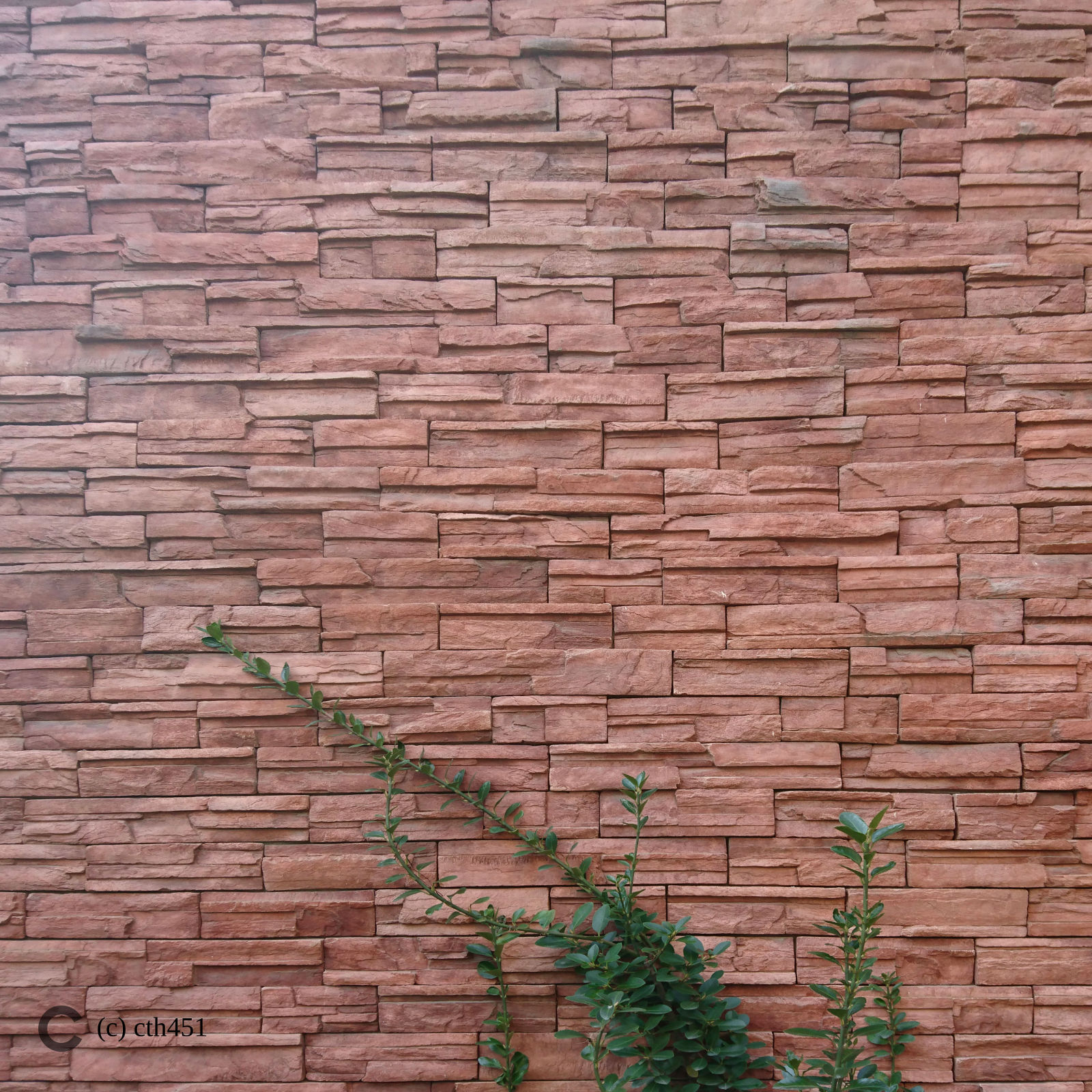 Veins on the brick wall